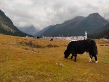 nachhaltiges Sikkim