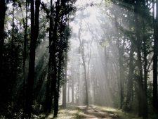 nationalparks indien, kanha nationalpark madhya pradesh