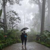 monsun kerala
