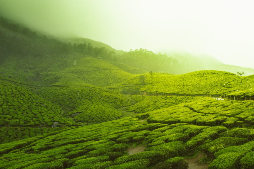 the best time to visit Kerala