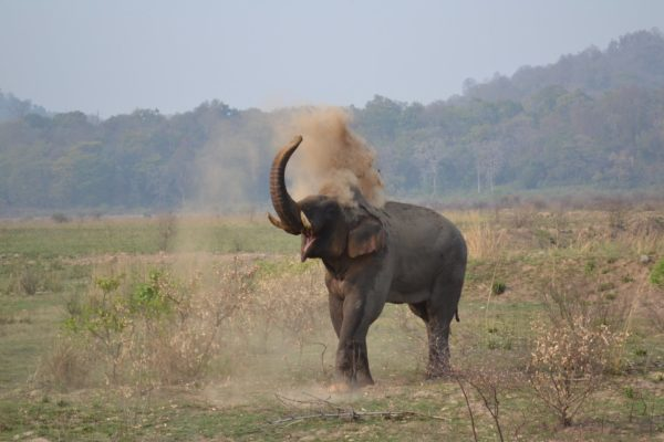 National Parks in South India,
