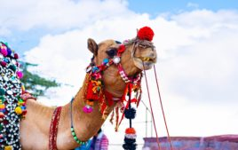 Festivals in Bikaner