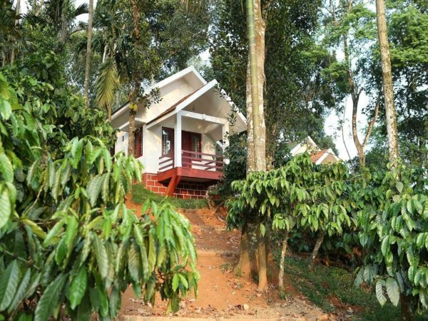 Coffee plantations South India Wayanad