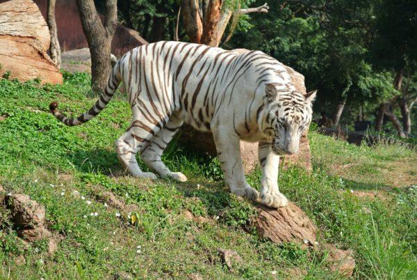 wildlife in India, Safari tours in India