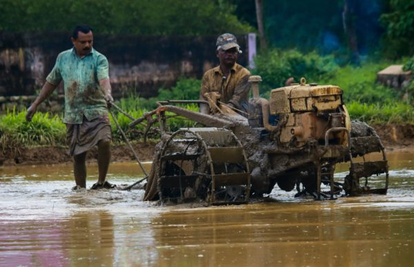 Cultivating Paddy Field, weather in south India in May and June