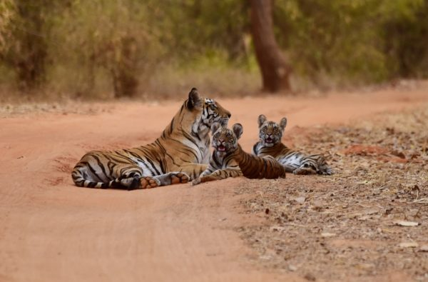 Safaris in India, tours around Rajasthan India