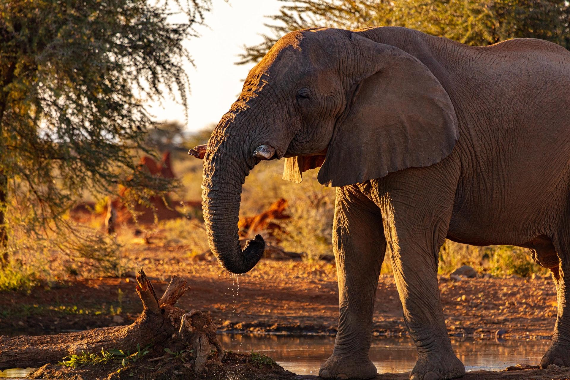 Wayanad Wildlife Sanctuary, Wildlife in India