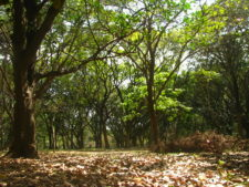 Parks in Bangalore, India
