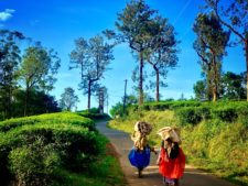 Things to do in Wayanad, Kerala
