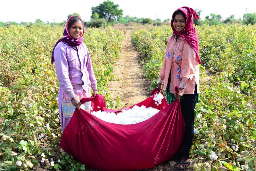 Culture du coton et fabrication de produits en coton