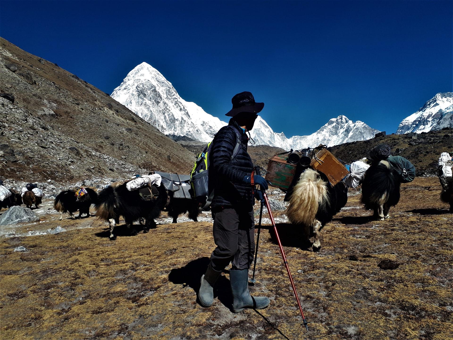 Yak ride in Himachal