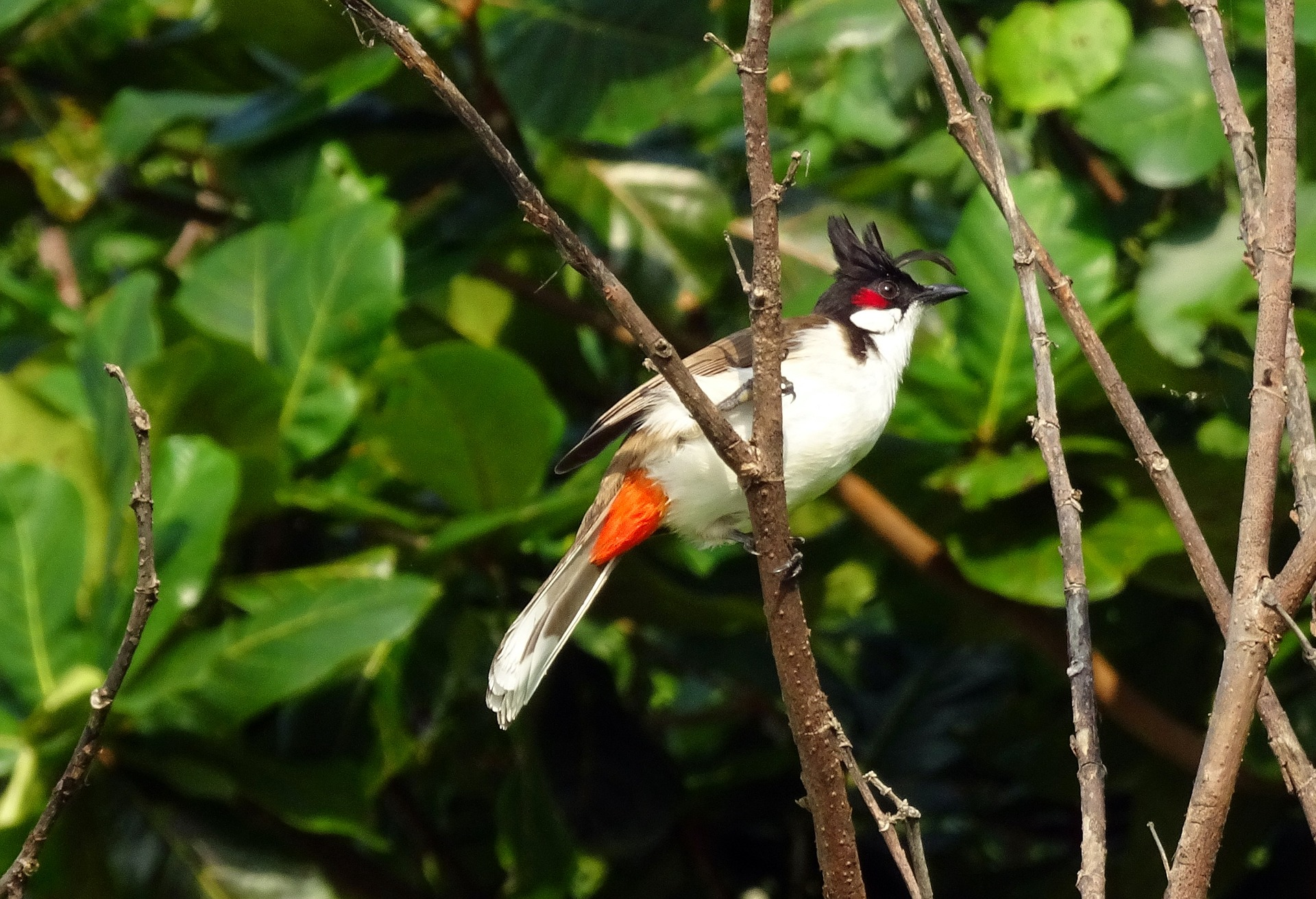 flaura and fauna in andamans